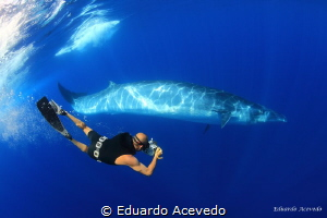 Bryde Whlale in the blue ocean and one of my best friends... by Eduardo Acevedo