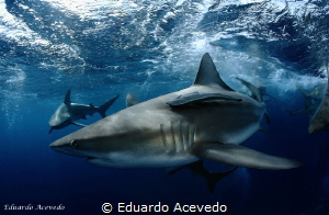 Aliwall Shoal, South Africa. by Eduardo Acevedo