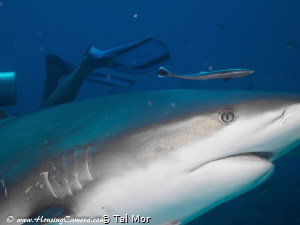 Shark up close - Image uploaded for testing purposes , ta... by Tal Mor