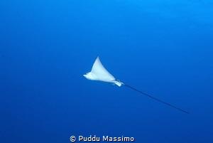 nikon D2X,12-24 mm by Puddu Massimo