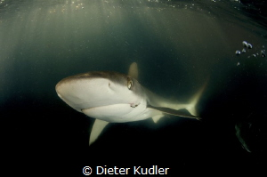 Shark with hook by Dieter Kudler
