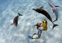 Dolphin trip to Bahamas. Sometimes the dolphins just love... by Todd Mintz
