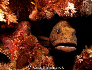 CLOSE TO THE GROUPER by Cinzia Bismarck