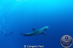 Dolphin in Tiputa pass, Rangiroa by Cangemi Paul