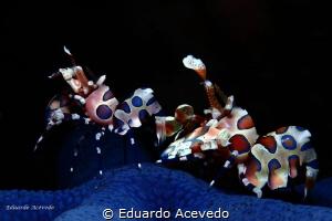 Tulamben bay. by Eduardo Acevedo