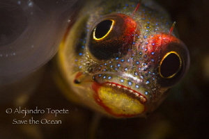 Blenny in front, Acapulco Mexico by Alejandro Topete