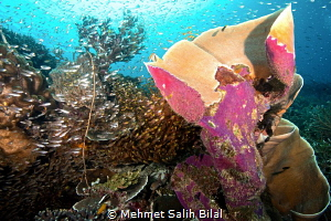 An Underwater life explosion during current in Arborek, R... by Mehmet Salih Bilal