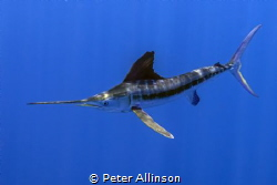 Taken about 10-20 miles off the coast of Cancun, we were ... by Peter Allinson
