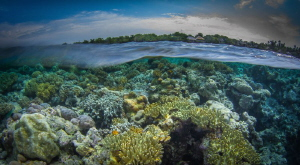 A very low tide on Wakatobi's House Reef by Steven Miller