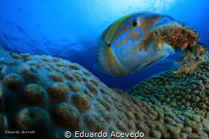 Endoscopic len. by Eduardo Acevedo