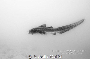 """ SHARK FIN SOUP? NO THANKS!""  by Isabella Maffei"