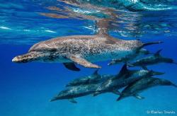 Not so synchronized swim team of the Bahamas. Shot around... by Markus Davids