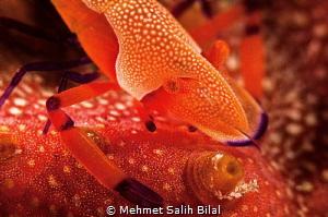 Red 2. by Mehmet Salih Bilal