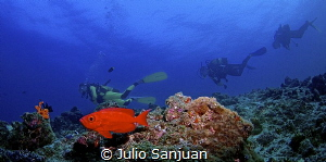 Glasseye fish and divers by Julio Sanjuan