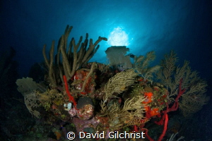 Reef Scenic, Roatan Marine Park, Texas Drift Dive by David Gilchrist