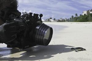 Nikon vs. Loggerhead by Petteri Viljakainen