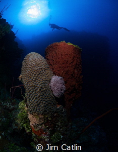 Giant star and barrel sponge formation on Grand Cayman's ... by Jim Catlin