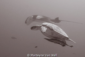 Synchronized swimming by Marteyne Van Well