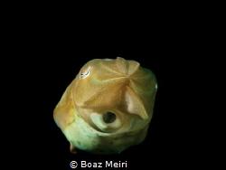 Cuttlefish by Boaz Meiri