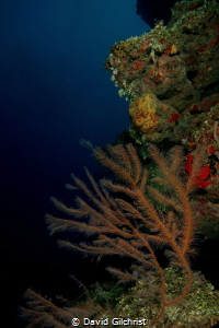 Along the Wall, 'Peter's Place' Roatan Marine Park by David Gilchrist
