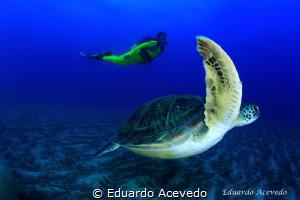 Green tortoise by Eduardo Acevedo