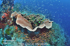 moray eel home by Oscar Miralpeix