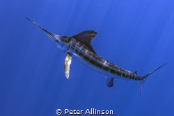 Photo taken about 10-20 miles off the Cancun coast. by Peter Allinson
