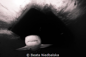 I <3 sharks so Bahama's is the place to be. Next the grae... by Beata Niedbalska