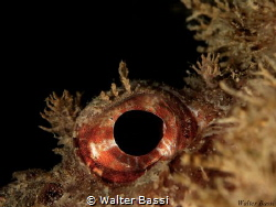 eye by Walter Bassi