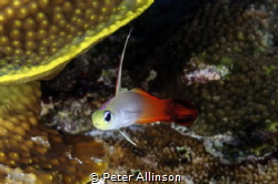 taken in Bunaken marine park by Peter Allinson