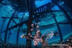 Under the pier by Marcello Di Francesco