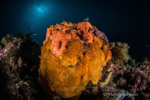 Sponge-Ball by Marco Gargiulo