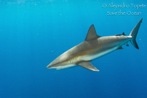 Shark in the Blue ocean, Gardens of the Queen Cuba by Alejandro Topete