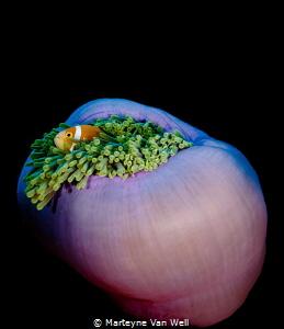 Nemo found! by Marteyne Van Well