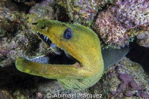 Green Moray by Abimael Márquez