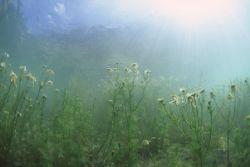 Lake Marmorera, Switzerland. After many rainy days the la... by Pablo Pianta