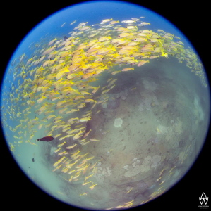 Circles of Life #18 - Ocean Planets by Allen Walker