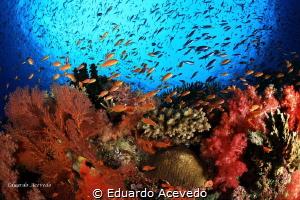 Colors by Eduardo Acevedo