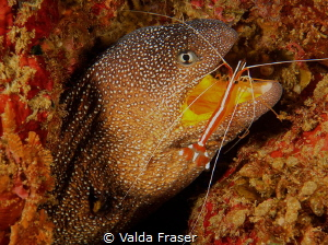 The shrimp jumped into the eels mouth, but the landing wa... by Valda Fraser