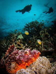 Scorpionfish let you get very close to focus- here about ... by Steven Miller