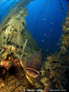 "Grouper on the ""Joker"" wreck by Alberto Gallucci"