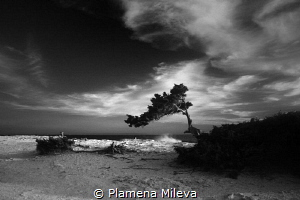 The photo was taken on the isl.of Ibiza,Spain from me in ... by Plamena Mileva