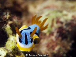 Nudi by James Deverich