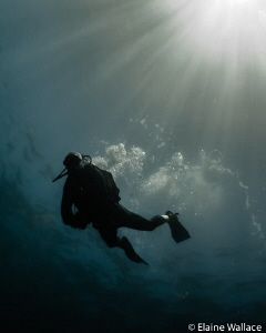 Just enjoying diving with my husband. by Elaine Wallace
