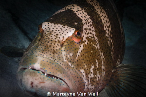 Up close and personal by Marteyne Van Well