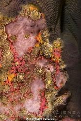 [:b:]Froggy portrait[:/b:] Perfect camouflage by Francesco Pacienza