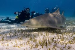 Lemon Shark among photographers by Karl Dietz