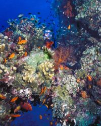 Peek-a-boo! I see you!  Red Sea, using Nikonos 5, single... by Michael Canzoniero
