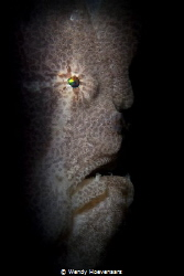 Frog Fish portrait by Wendy Hoevenaars