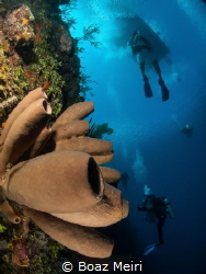 Brown Tube Sponge and Divers by Boaz Meiri